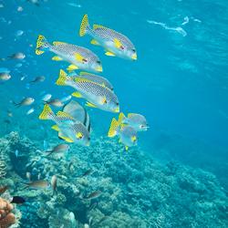 Australia's Great Barrier Reef & Whitsunday Island