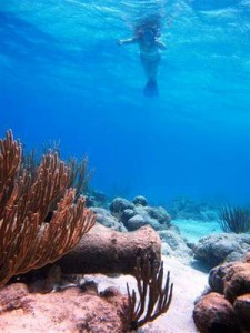 Anya found guests discovering this submerged canon, while snorkeling the British Virgin islands