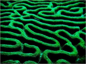 """Like a fish in a corn maze? Richard and Jan aboard SCORPIO supplied us with this """"amazing"""" coral image"""